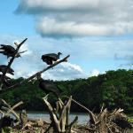 экспедиция на Амазонку