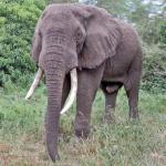 Экспедиция в Африку, тур в Танзанию и на Занзибар